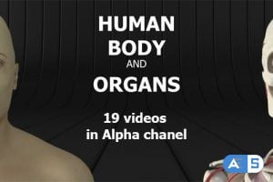 Videohive – Human Body and Organs 20727612