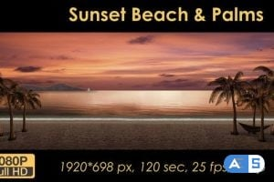 Videohive – Sunset Palm Trees On The Beach 21608400