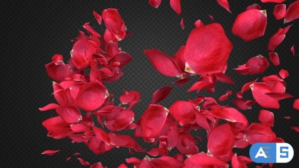Videohive Rose Petal Transitions Pack 21294817