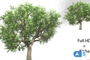 Videohive Growing Tree 21369075