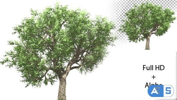 Videohive Growing Tree 21369075