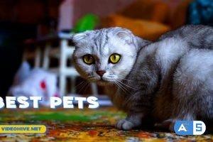 Videohive Pets Slideshow 31470611