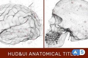 Videohive HUD UI Anatomical Titles 33042984